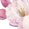 kwiat-wiśni-akwarela